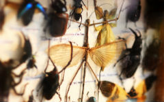 collecting-minerals-insects-and-herbals-3
