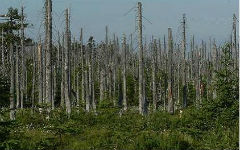 problems-of-forest-in-the-crimea-1